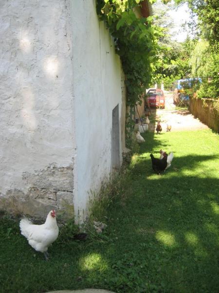 Les poules du gîte