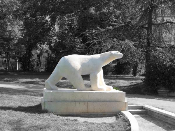 L'ours du parc Darcy
